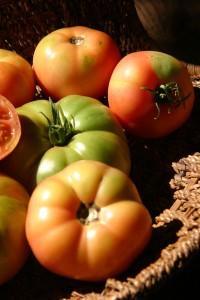 Tomates de mi jardin